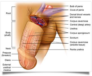 Erectile dysfunction cialis viagra